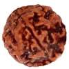 What is the significance of adorning rudraksha when performing ritualistic worship?