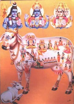 All deities are present in Cow (Gomata)