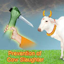 Cow-slaughter prevented by activists of Shri-Shiva-Pratishthan on the day of 'Ram Navami'