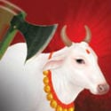 Bengal-Bihar border : Devout Hindus rescue 100 cattle from clutches of butchers heading towards Bangladesh
