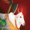 Maharashtra : Strong opposition to slaughtering of cows