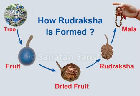 1374068435_rudraksha_475