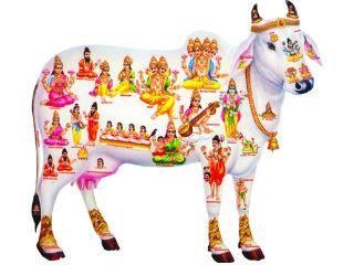cow-gomata320