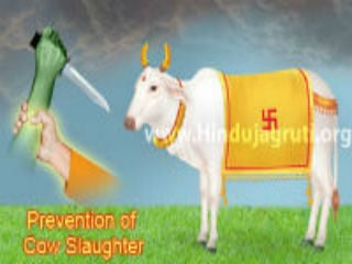 prevention_cowSlaughter