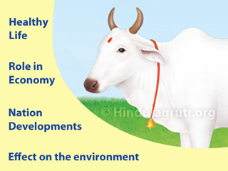 Importance_of_bharatiya_cow