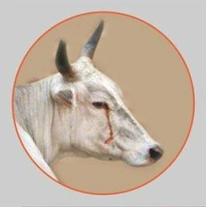 save_cow