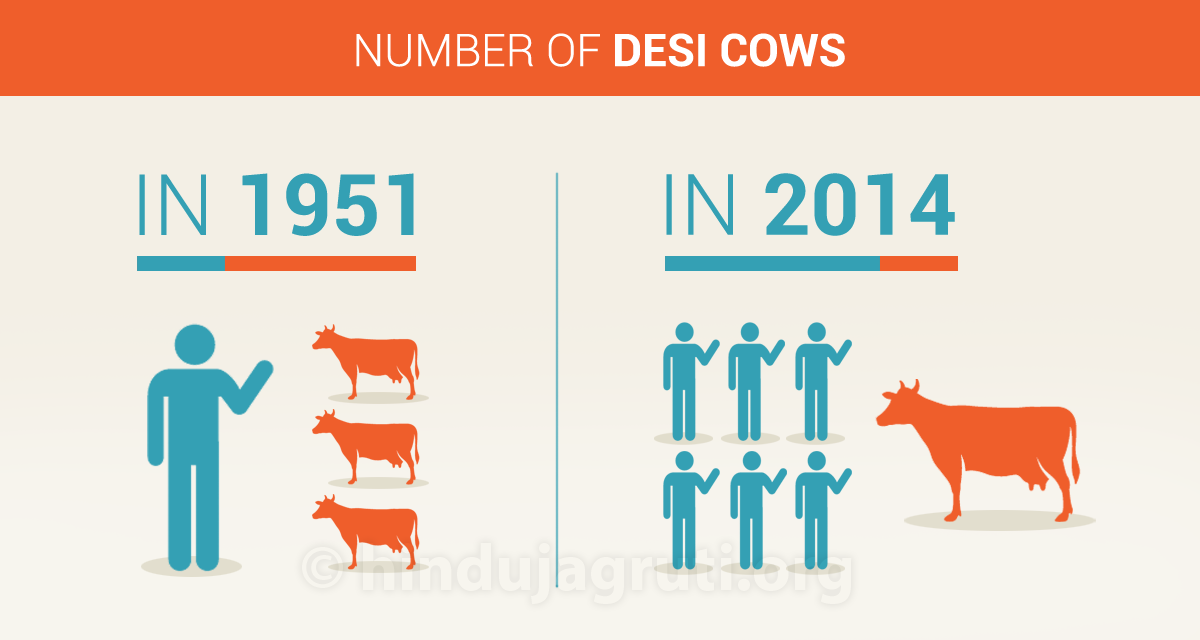 2_Cow-numbers-1