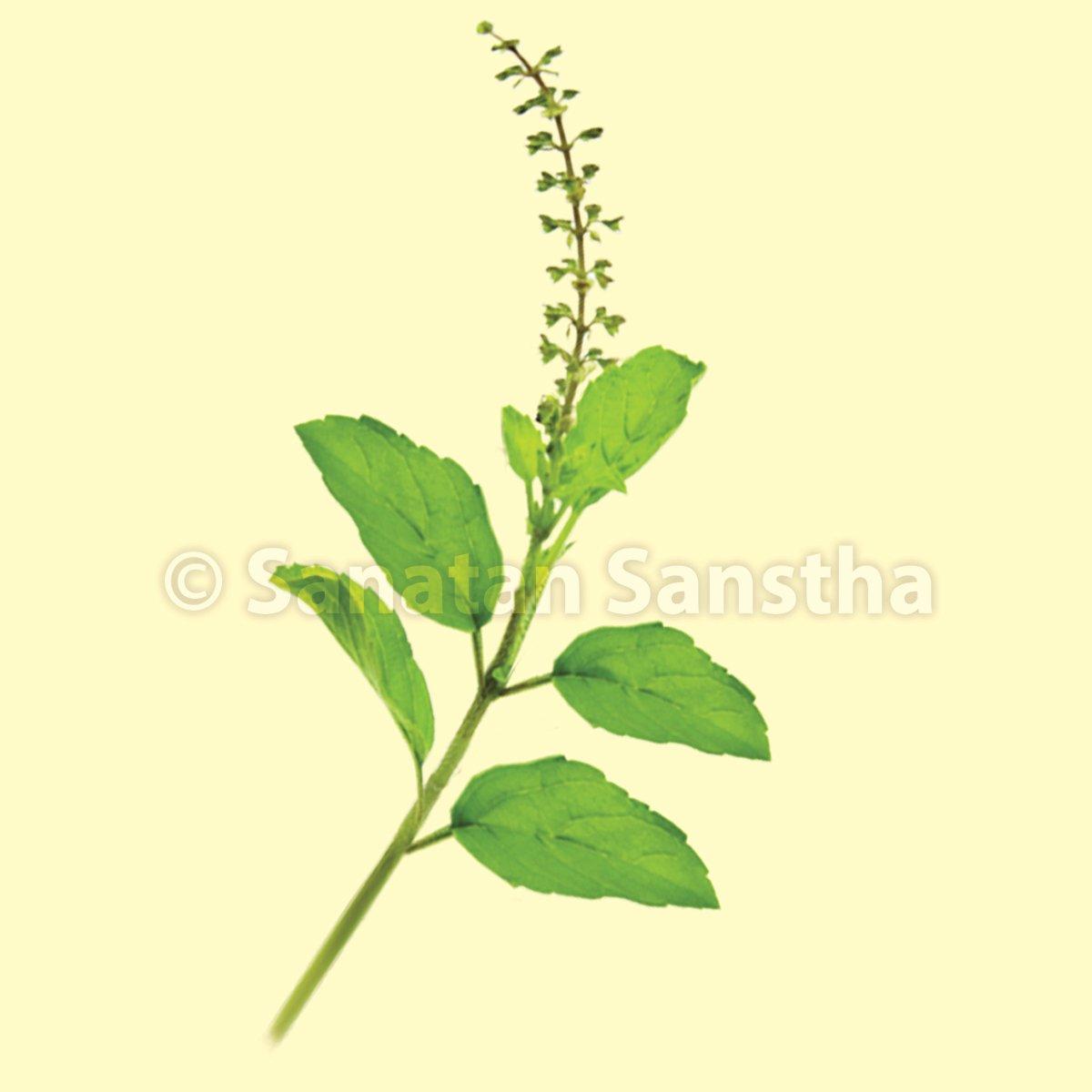 tulas_leaf_2