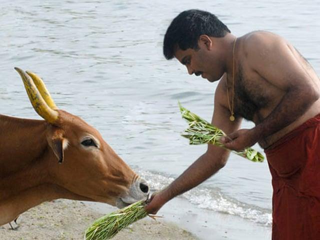 cow_grass_640