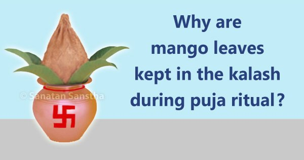 Why are mango leaves kept in the kalash during puja ritual
